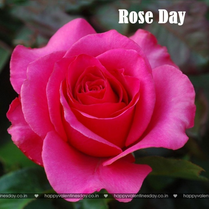 Rose Day – happy valentines day for kids | Happy Valentines Day ...
